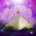 ascension lotus